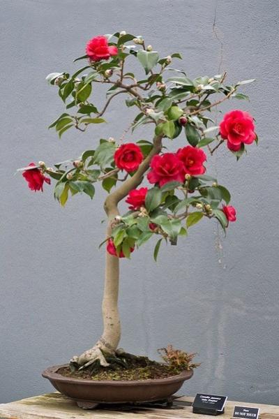 Decoración Flores y Plantas Eugenia Marín