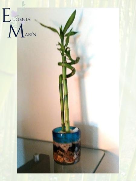 Lucky bamboo Eugenia Marín